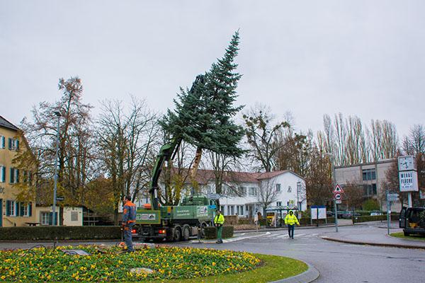 Der Weihnachtsbaum 2016